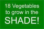 18 Vegetables to grow in the shade.
