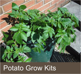 Potato Grow Kits