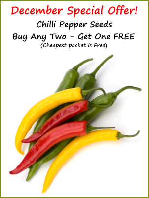 Chilli Special Offer