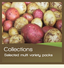 Choose from over 40 varieties of Seed Potatoes at SimplySeed co uk