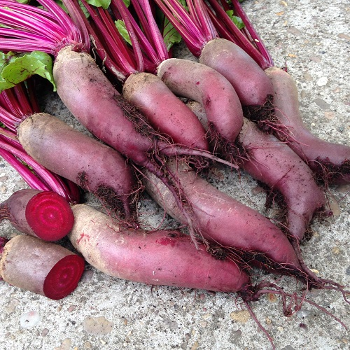 Beetroot Seeds Cylindra