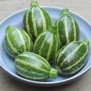 Courgette Piccolo