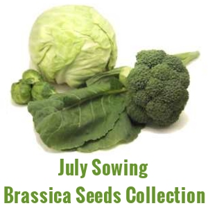 July Sowing Seeds  - Brassica Collection