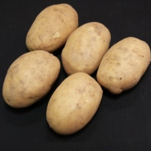 Christmas Potato Seeds -  Maris Peer