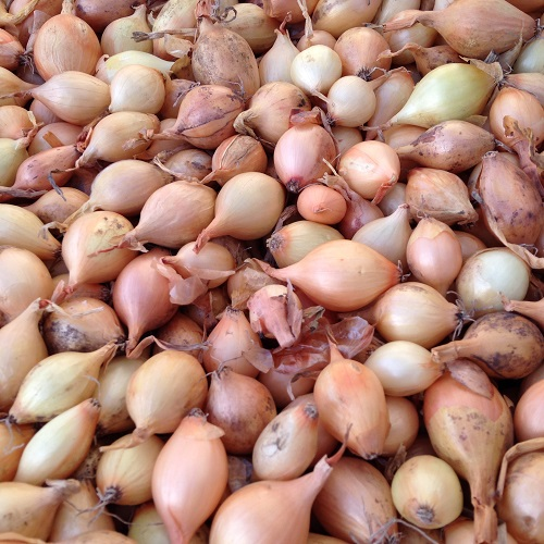 Onion Sets Sturon - Buy in Bulk