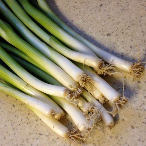 Spring Onion Guardsman