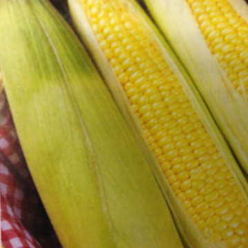 Sweetcorn Northern Extra Sweet