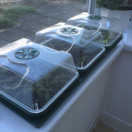 3 Tray Windowsill Propagator Set - Unheated