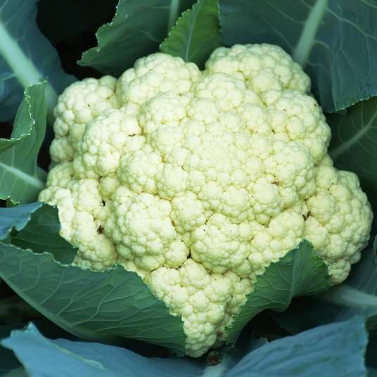 Cauliflower Maybach
