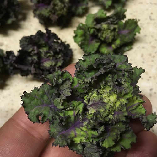 Kalettes Garden Mix - Flower Sprout