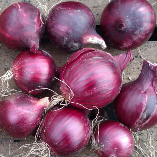 Red Onion Red Baron