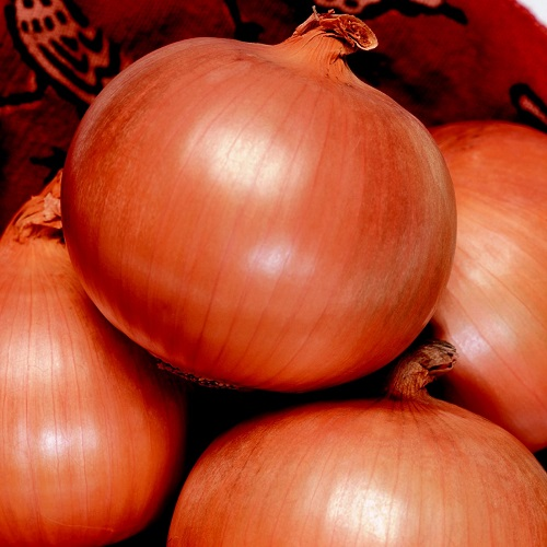OverWinter / Japanese Onion Seeds Toughball