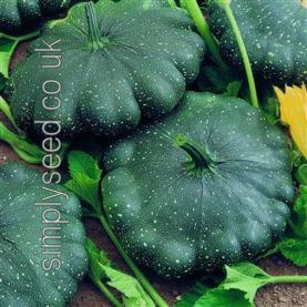 Squash Patty Pan Total Eclipse