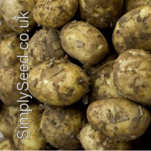 Valor Potato Seed